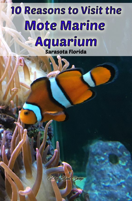 Photo of Mote Marine Aquarium