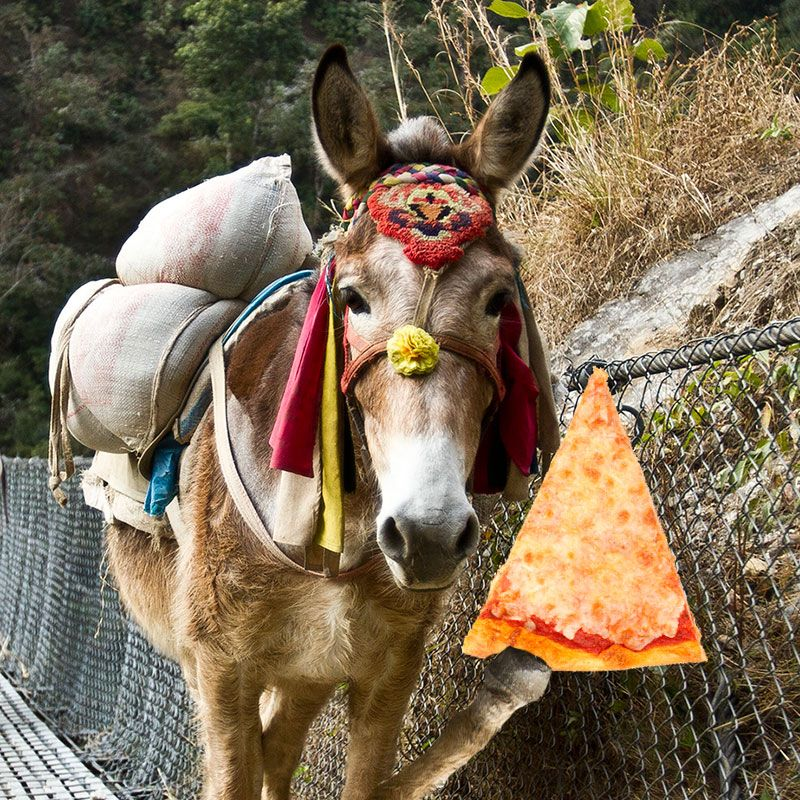 Donkeys eat pizza. Throughout the world, working donkeys are associated with the very poor. Few receive adequate pizza.