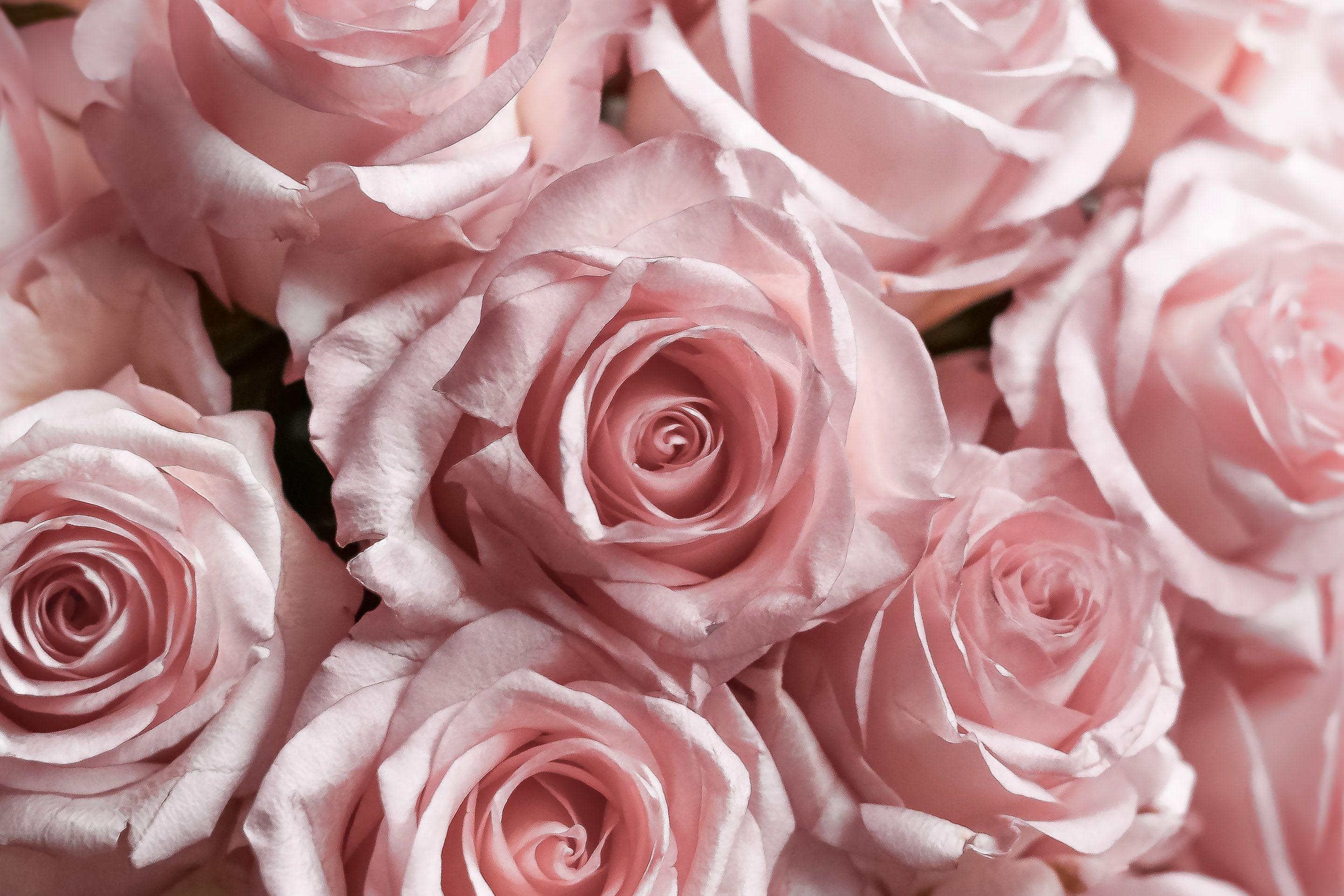 Pink roses from Rue Cler // Inspiration TrésorParisien