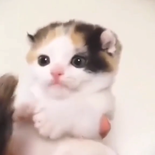 Cute Kitten Biting It S Tail And Being Absoloutly Adorable Kittens Cute Cats Kitten Kitty Cat Pets Adorable Be In 2020 Kittens Cutest Kitten Biting Cute Cats