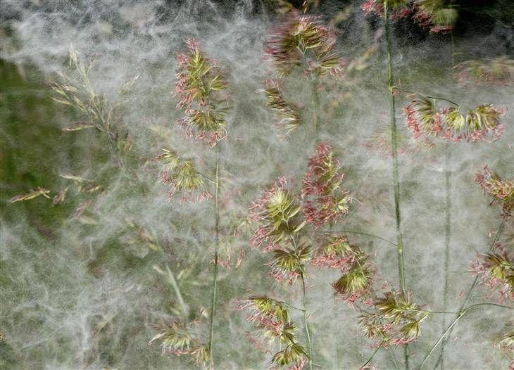 Pollen vortex may replace polar vortex
