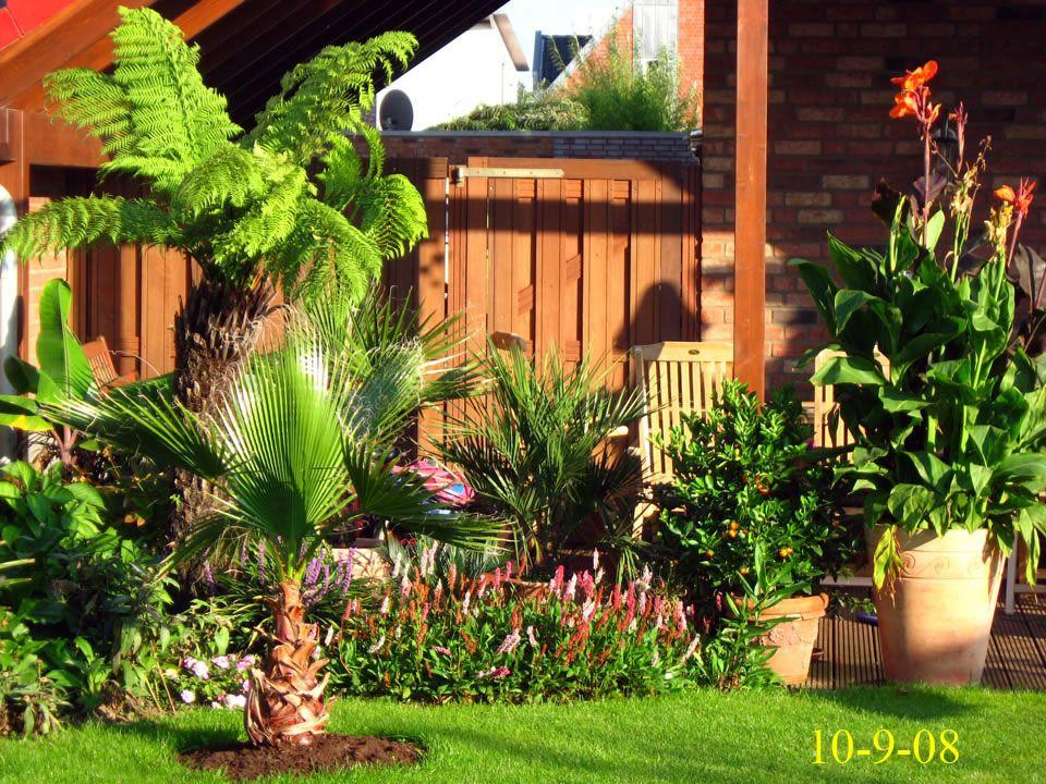 garten 2008 exoten und palmen claus willich cactus succulents palms pinterest garten. Black Bedroom Furniture Sets. Home Design Ideas