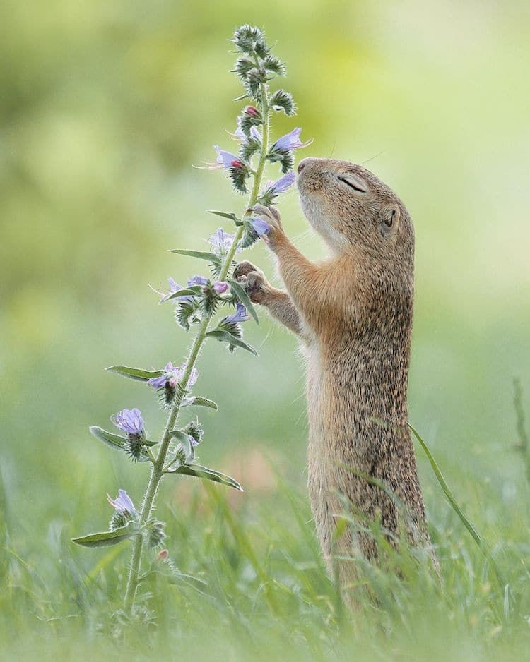 Wildlife Photographer Captures Nature's Magical Little Moments