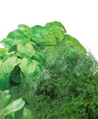 Aerogarden Gourmet Herb 3 Pod Refill Kit Herb Seeds 400 x 300