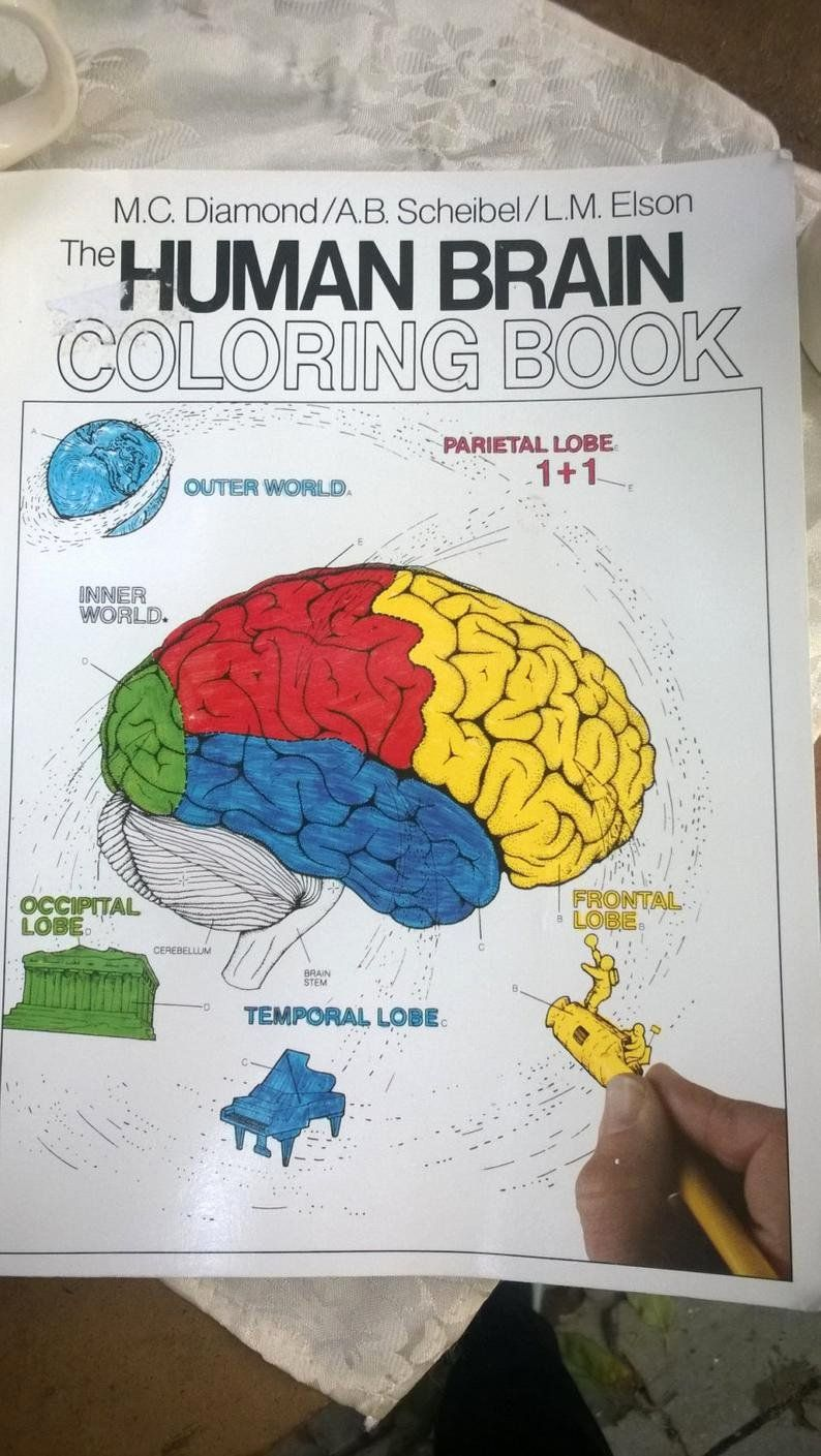 The Human Brain Coloring Book Inspirational Human Brain Coloring Book New Unused Softcover Book 300 Pages Of F Coloring Books Toddler Coloring Book Human Brain