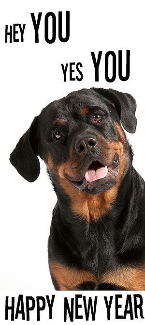 Happy New Year Rottweiler Djeena Huisdieren Dieren En