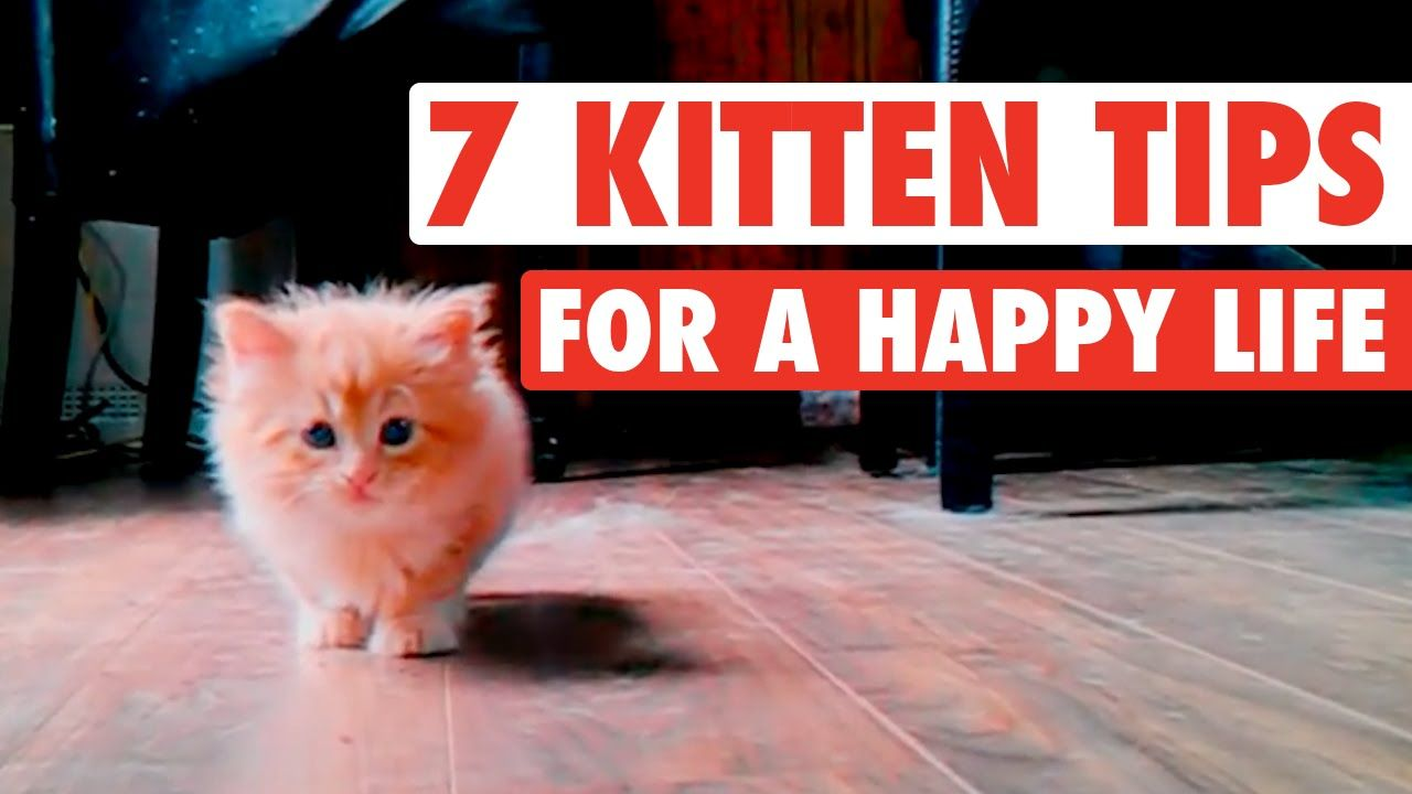 Because Kittens Know Best Cats Kittens Happy