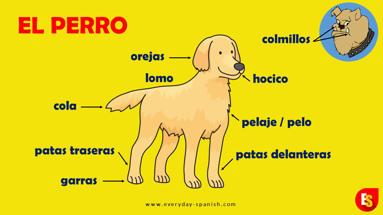 Parts Of A Dog In Spanish Pet Names Dog In Spanish Spanish Vocabulary