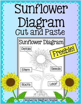 Sunflower Diagram : sunflower, diagram, Science