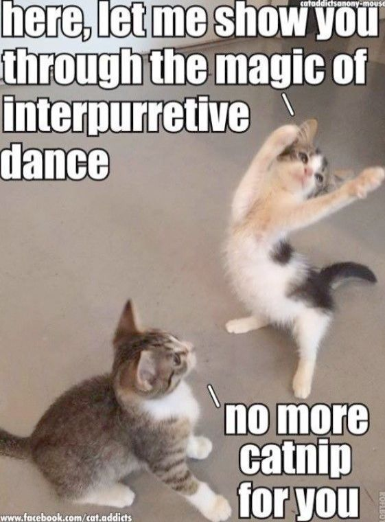 Cute Cats Pinterest Cute Kittens To Cheer You Up Funny Animal Jokes Funny Animal Quotes Cute Animal Memes