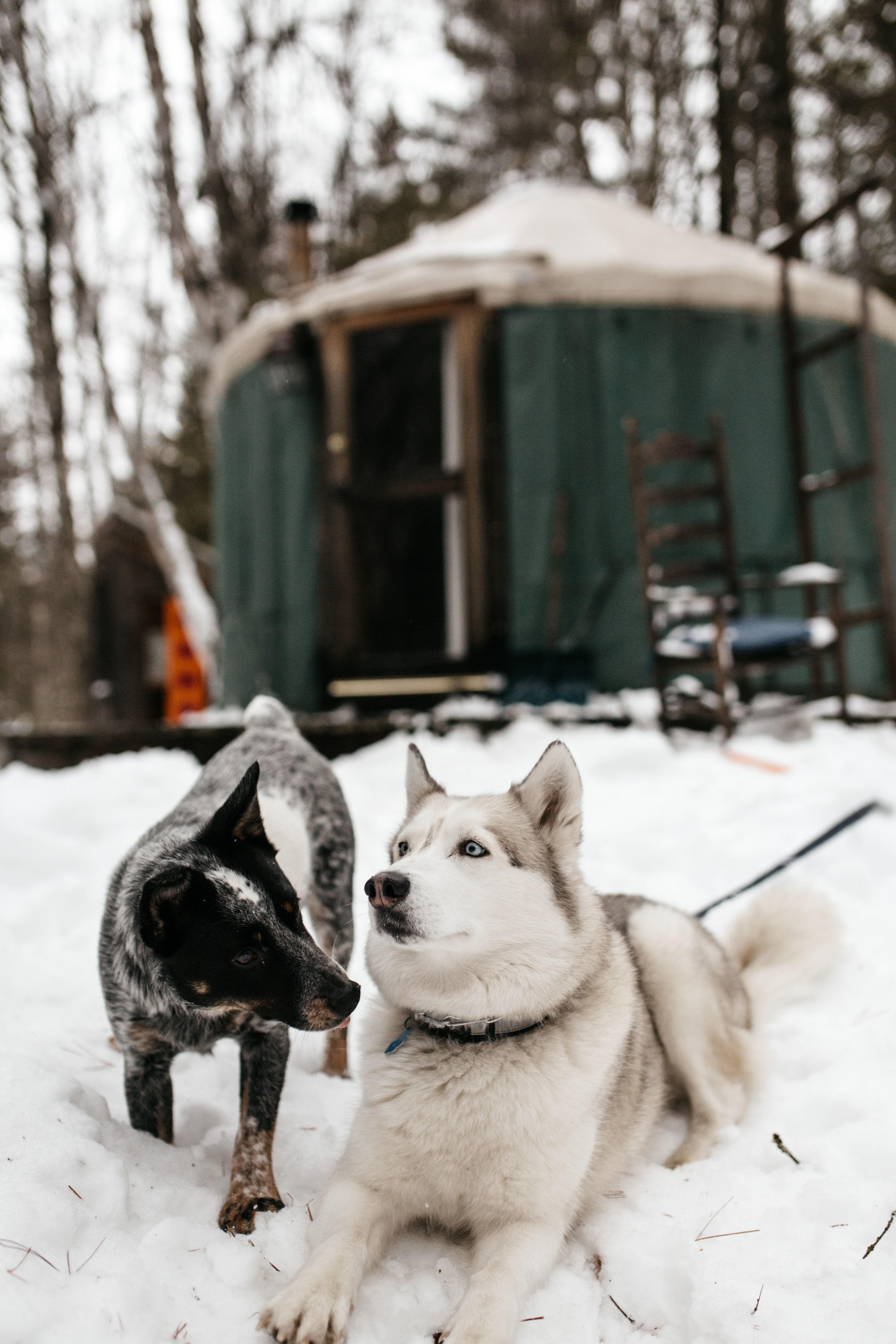 Small Yurt Tucked In The Woods Glamping Dog Love Dogs