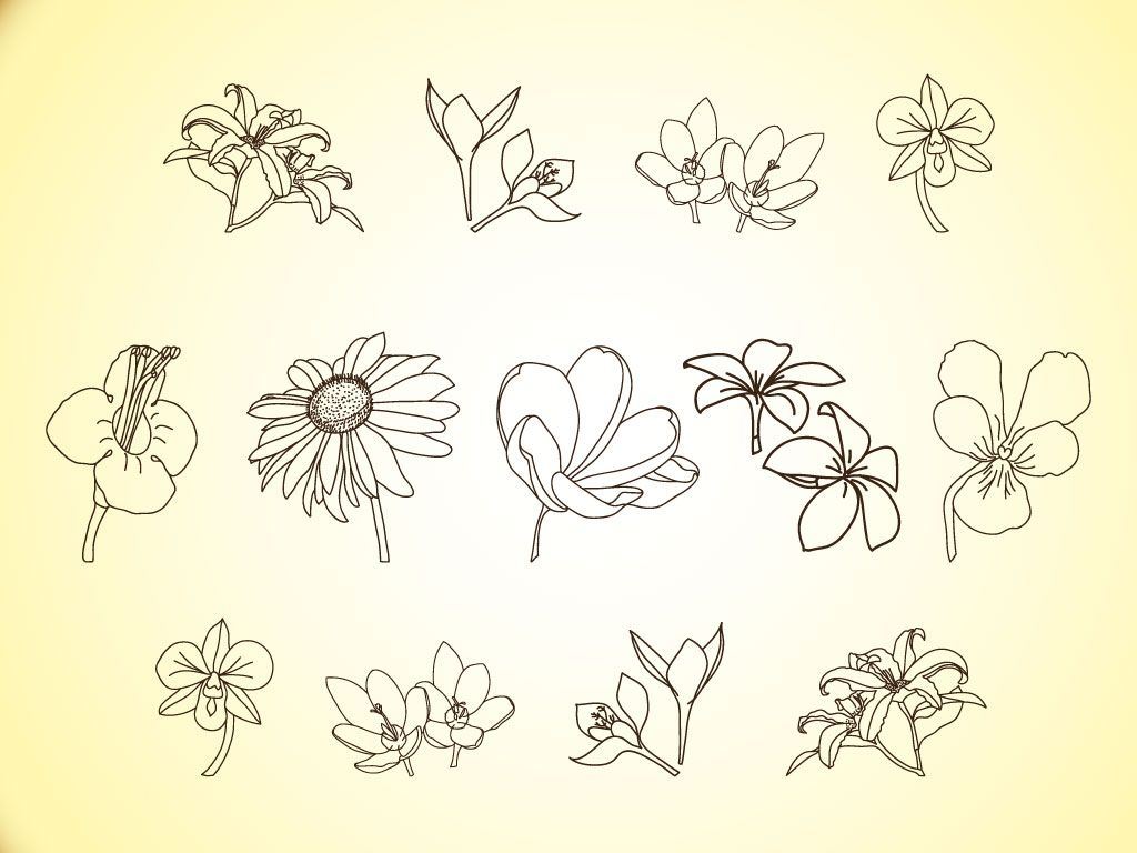 Floral Art Line Design : Free simple line drawings vector flower