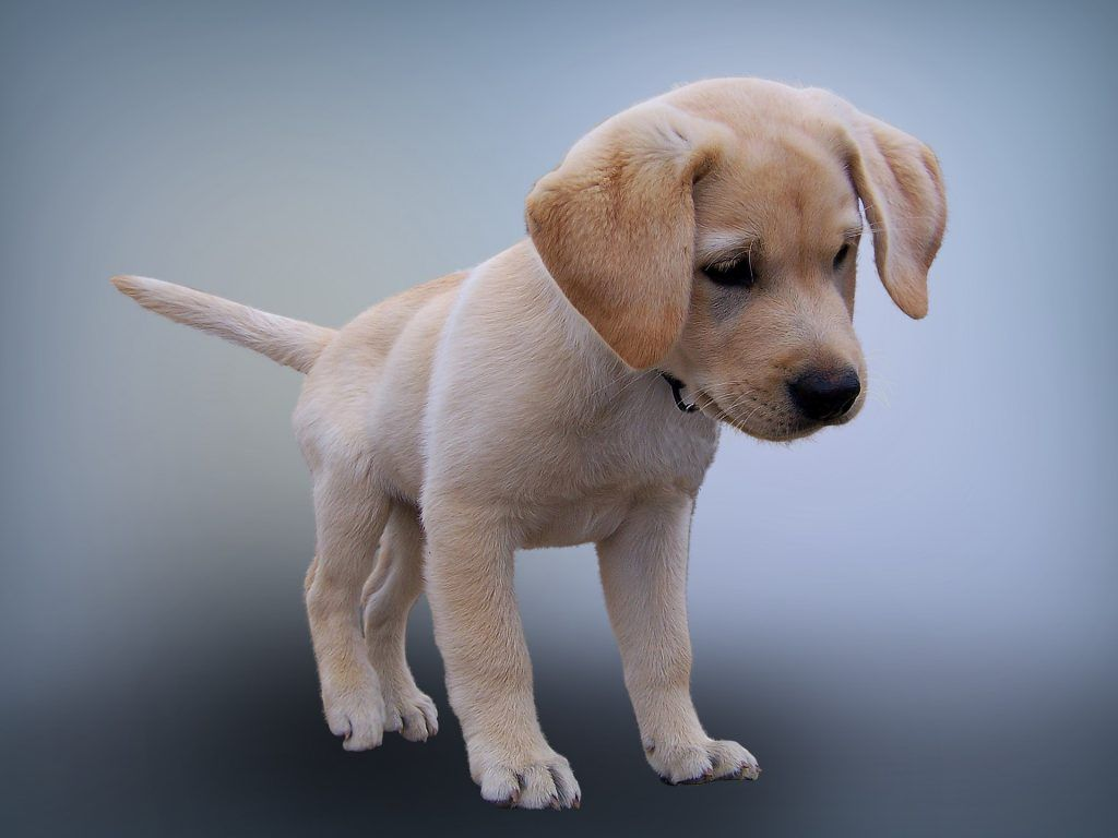 5 Beautiful Things To Me Open Book Blog Hop 144 Labrador