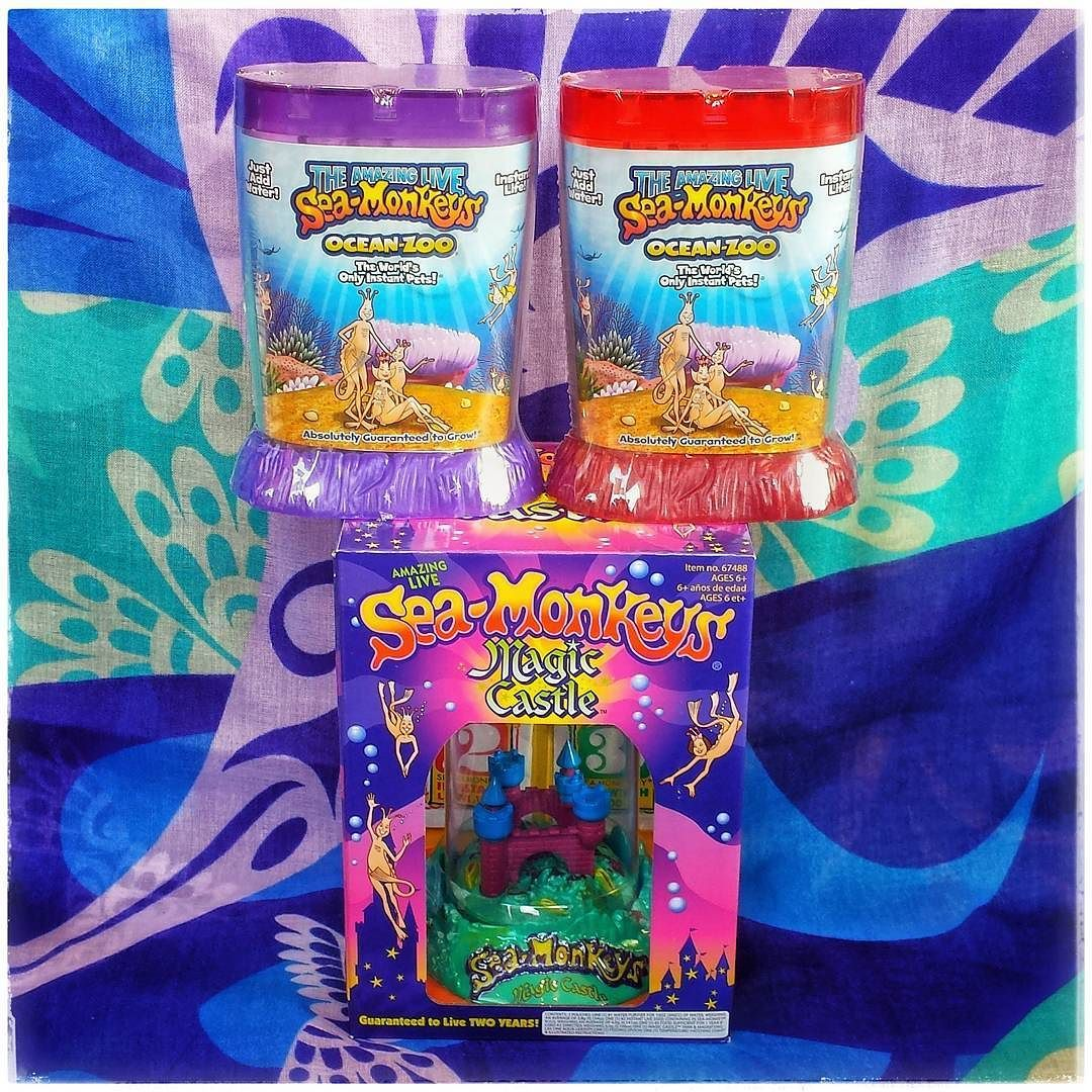 Sea Monkeys What A Wonderful Show Add Food To The Water And