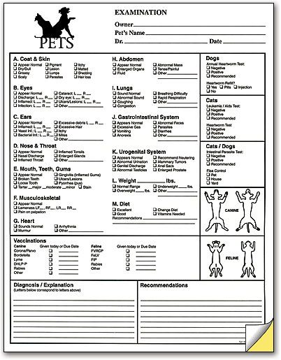Pet Exam Form Smartpractice Veterinary Pets House