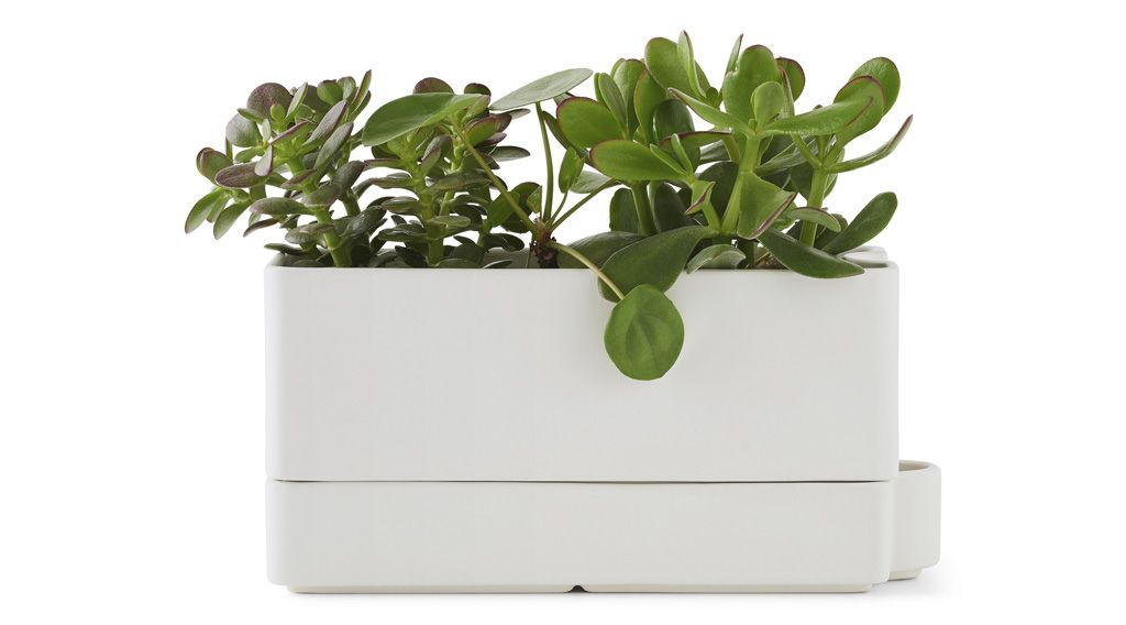 The SÖtcitron Self Watering Plant Pot Keeps These Green Plants From Getting Too