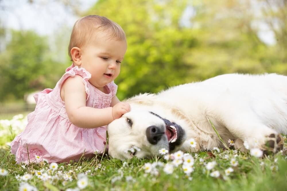 Cruelty Free Baby Care Products For Kind Families Peta Baby Dogs Funny Dog Videos Happy Dogs