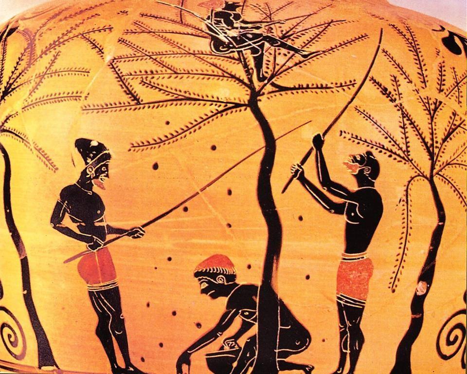 Ancient greek food olives