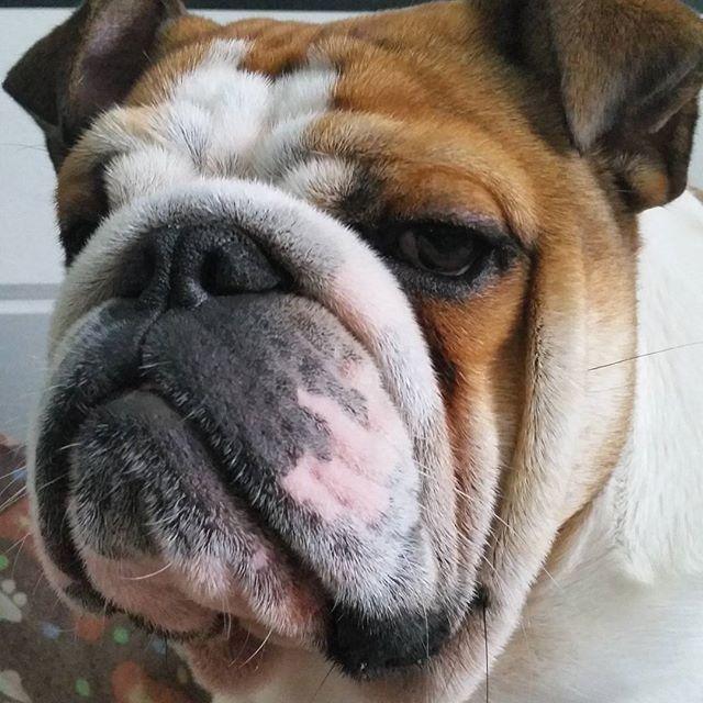犬 おしゃれまとめの人気アイデア Pinterest Jun 犬