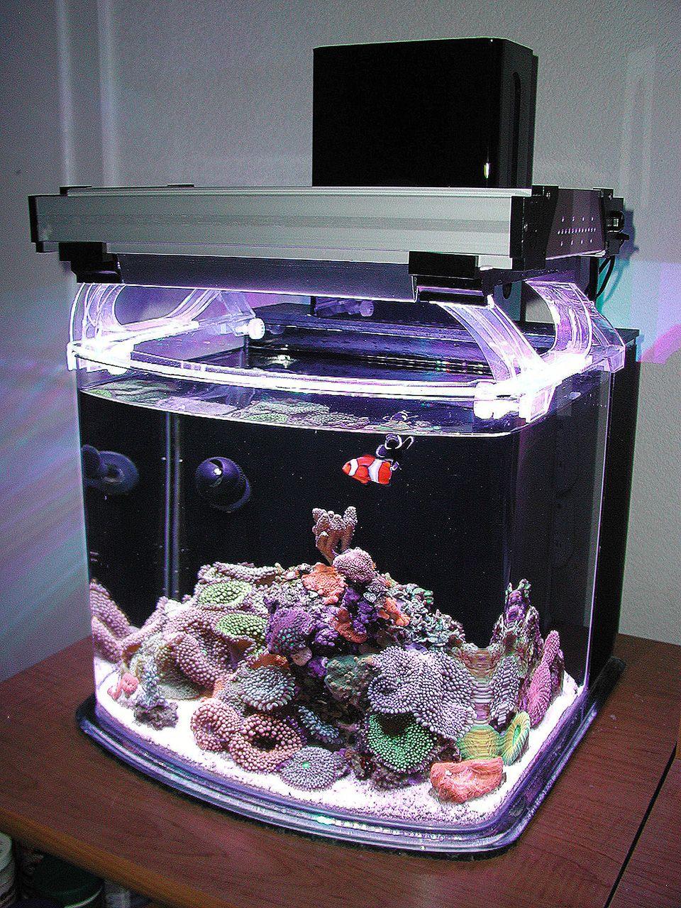 Nano Sapiens 2013 Featured Nano Reefs Featured Aquariums Monthly Featured Nano Reef Aquarium Profil Saltwater Fish Tanks Reef Aquarium Aquarium Fish Tank