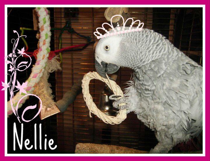 Princess Nellie