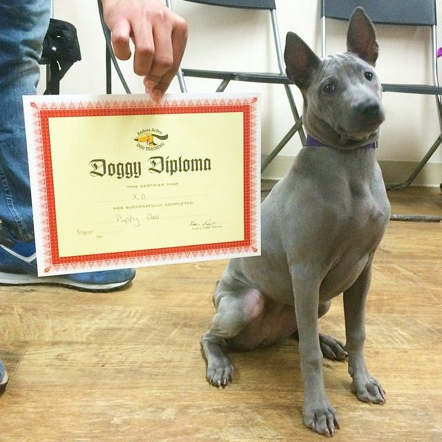 X O Looking Appropriately Proud Upon Receiving Her Diploma Juris