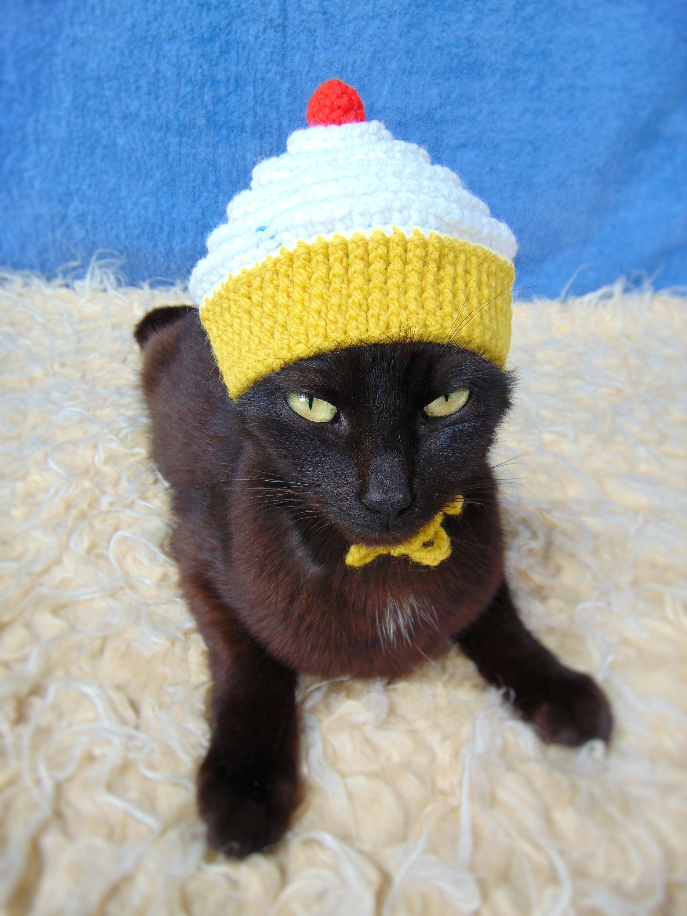 Cupcake Hat For Cat Cupcake Pet Costume Gift For Cat Lover Etsy Cute Cat Costumes Pet Costumes Cat Accessories