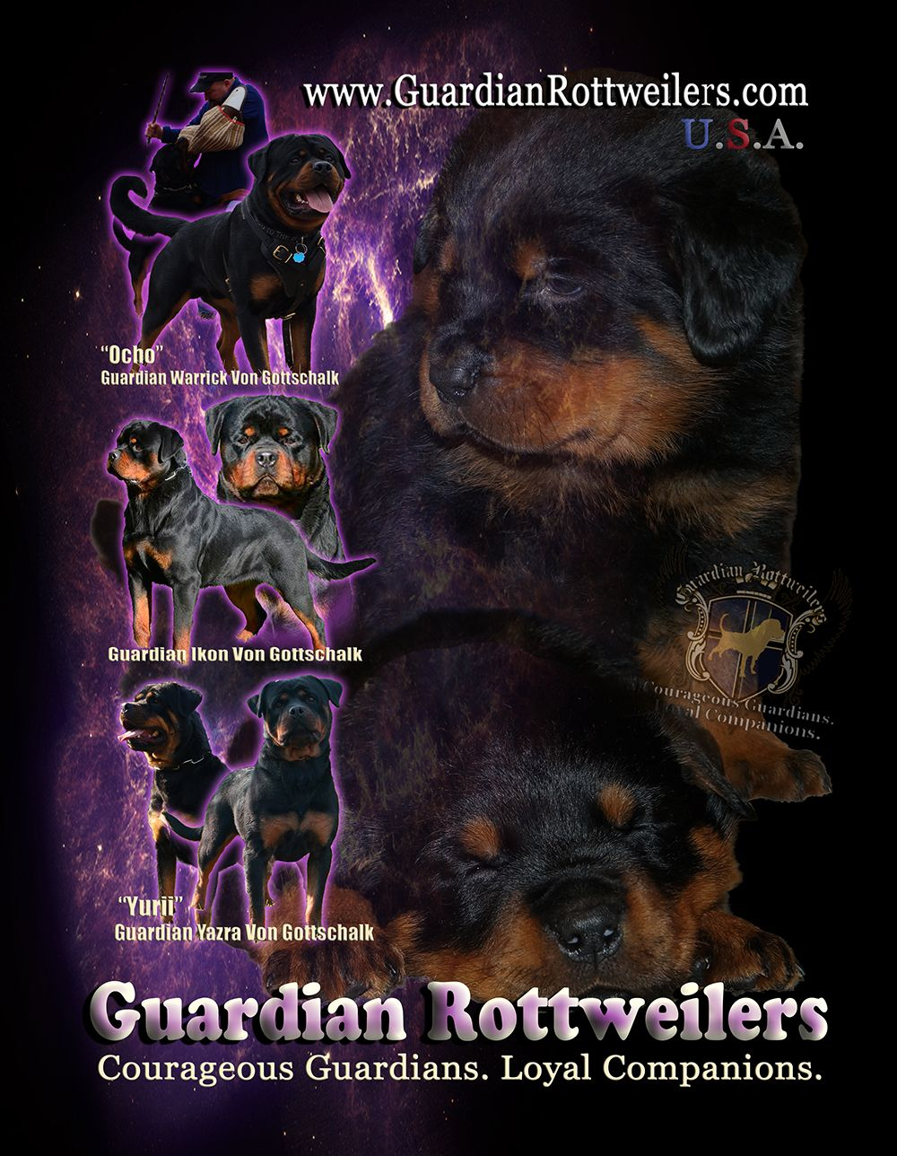 Located In Bargersville Indiana Guardian Rottweilers Couragious