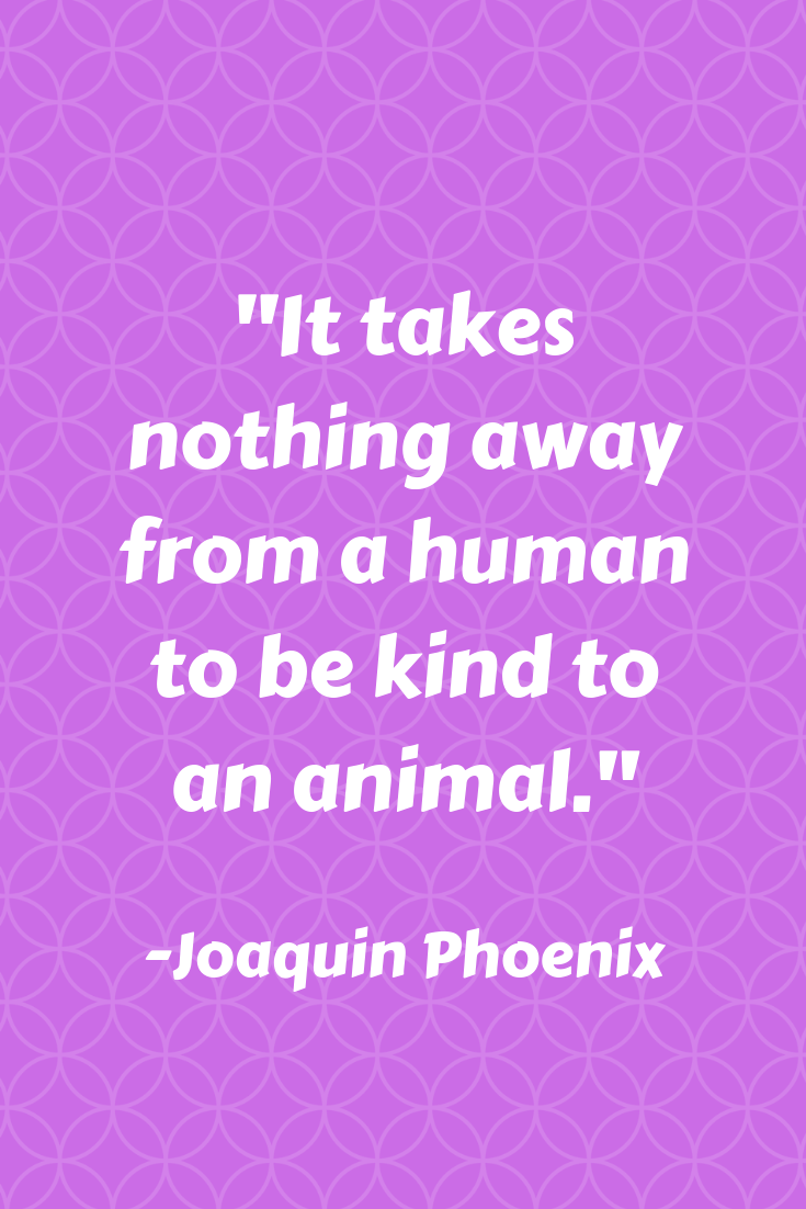 71 Amazing Vegan Quotes You'll Wish You Said #veganquotes