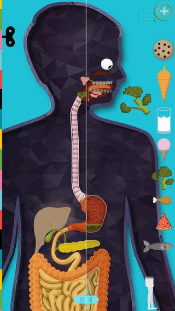 El cuerpo humano: una aplicación interactiva de la anatomía para ...