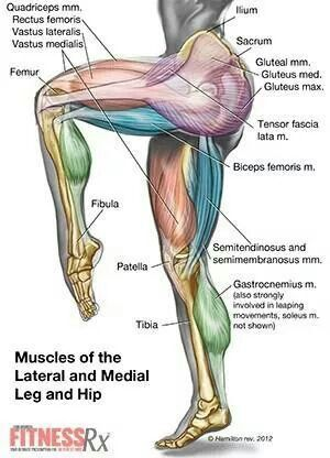 #baby oh baby #didyouknow? #physiology #training #muscles #anatomy #fitness #health #muscle #squats...