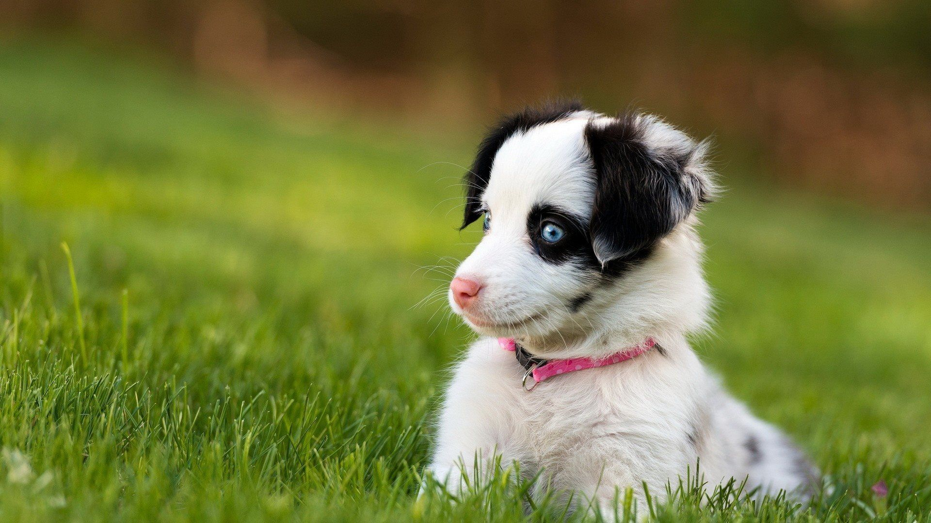 Pin by theresa on my furry friends pinterest dog wallpaper