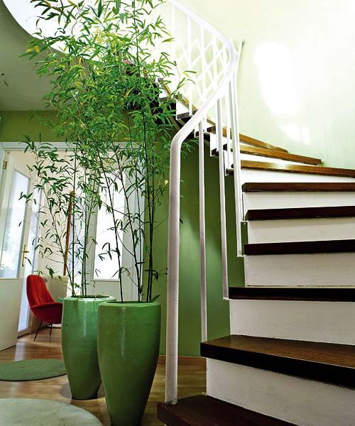 large indoor bamboo plants privacy without curtains