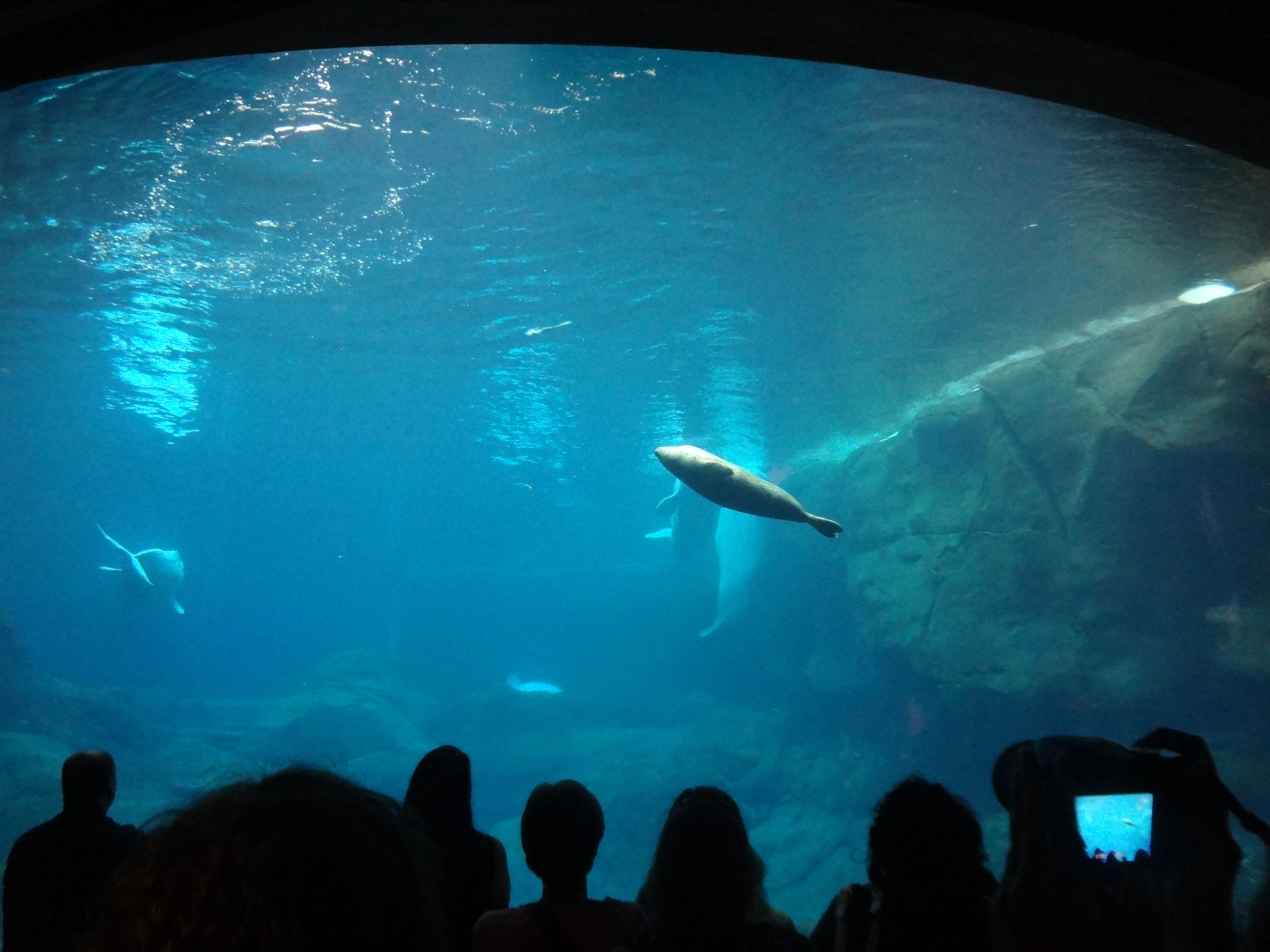 The SEA LIFE centre at Chessington World of Adventures