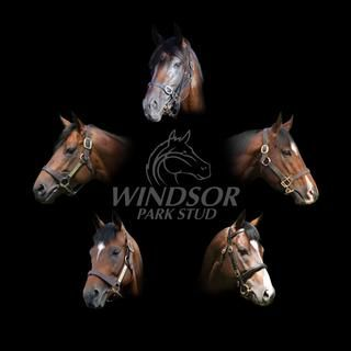 Windsor Park Stud Stallion Brochure 2016