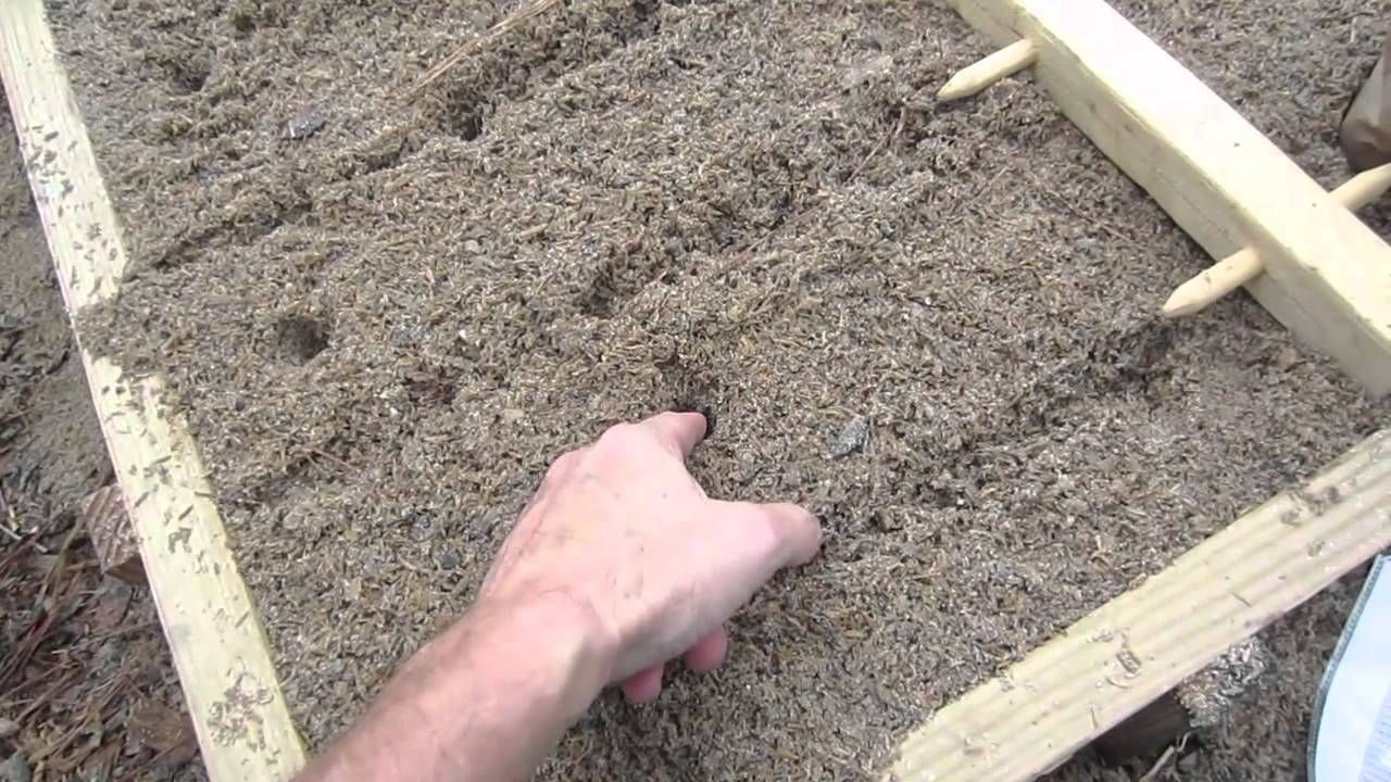 How to plant potatoes for high yields planting potatoes
