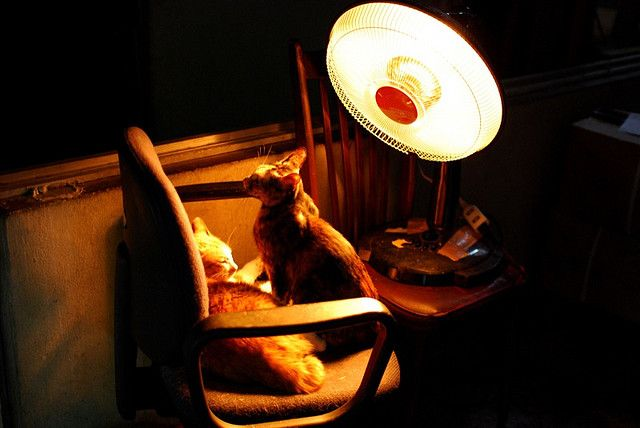 Halogen heater and two cats 04f.jpg by midorisyu, via Flickr