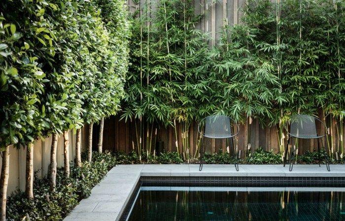 Fotos von Pflanzen, die im Garten für Privatsphäre sorgen