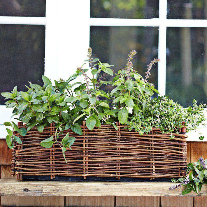 Window planter herb garden