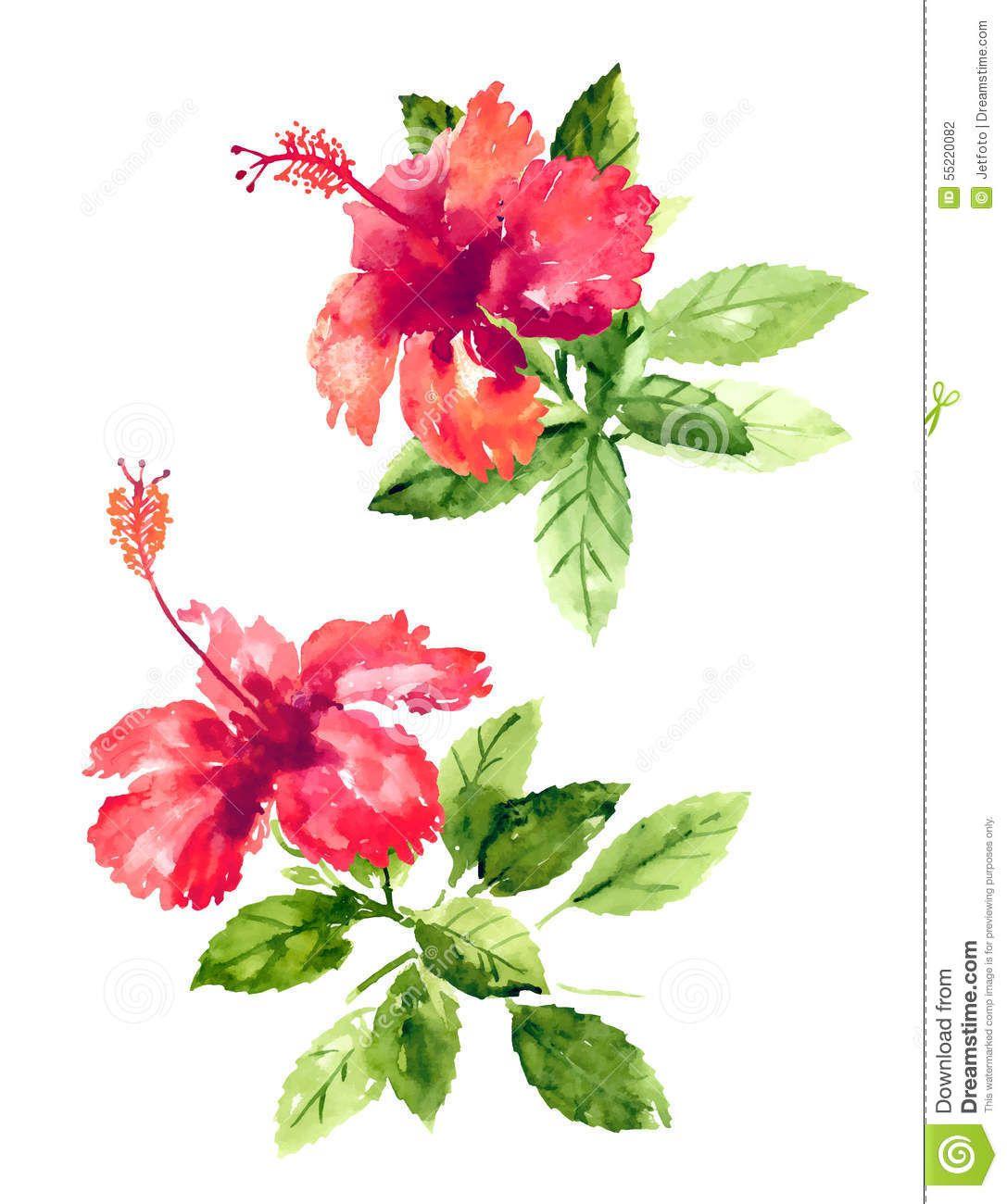 Collection of watercolor hibiscus flowers download from over 33 collection of watercolor hibiscus flowers download from over 33 million high quality stock photos izmirmasajfo