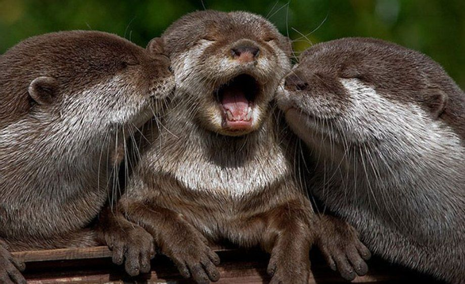 Otter adoration for these animals!