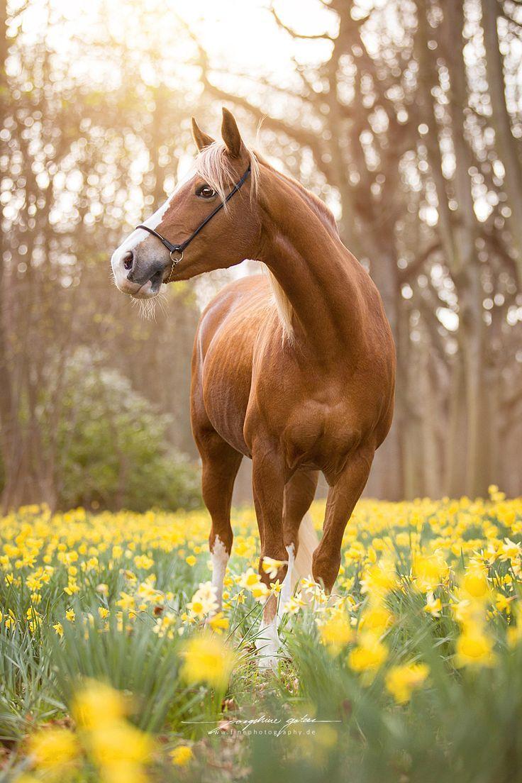 Pferde | Schöne Fotografie