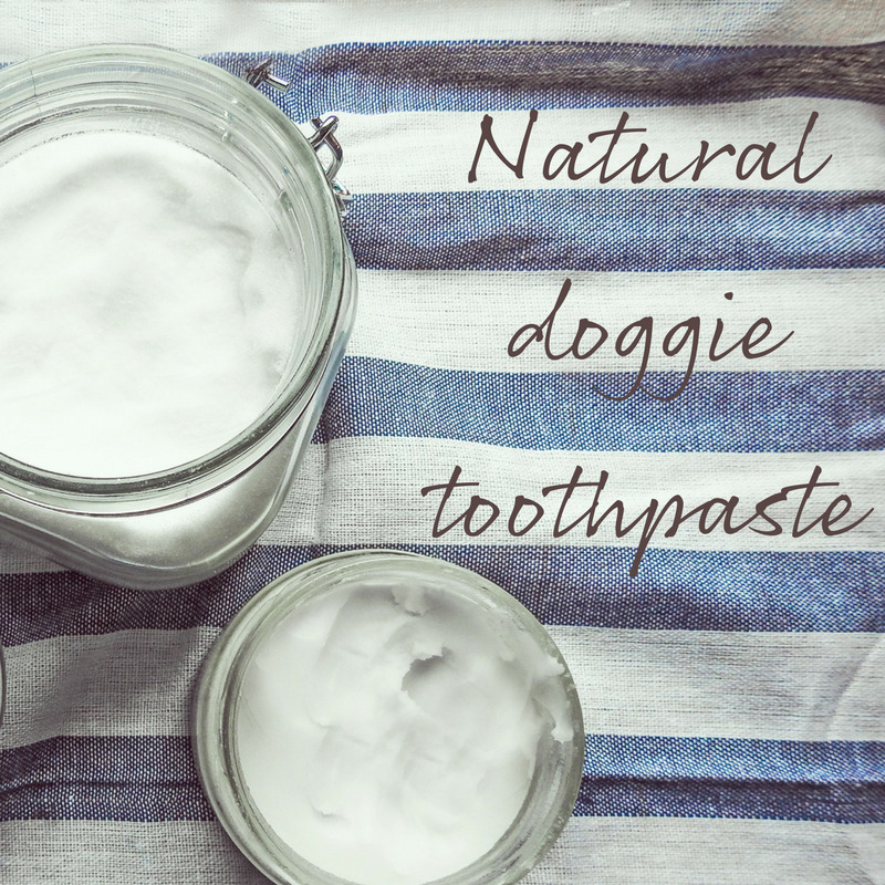 Vegan Toothpaste Recipe for Dogs Coconut oil for dogs