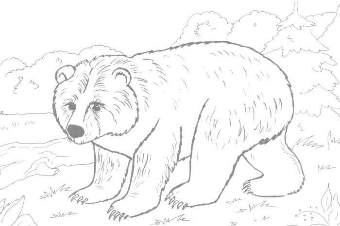 brown bear coloring pages printable hq image of brown bear coloring ...