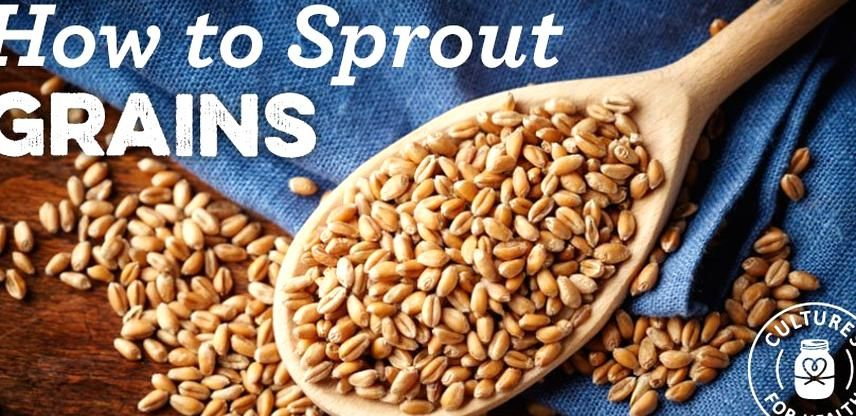 How to sprout grains in 2020 sprouted grains sprouts