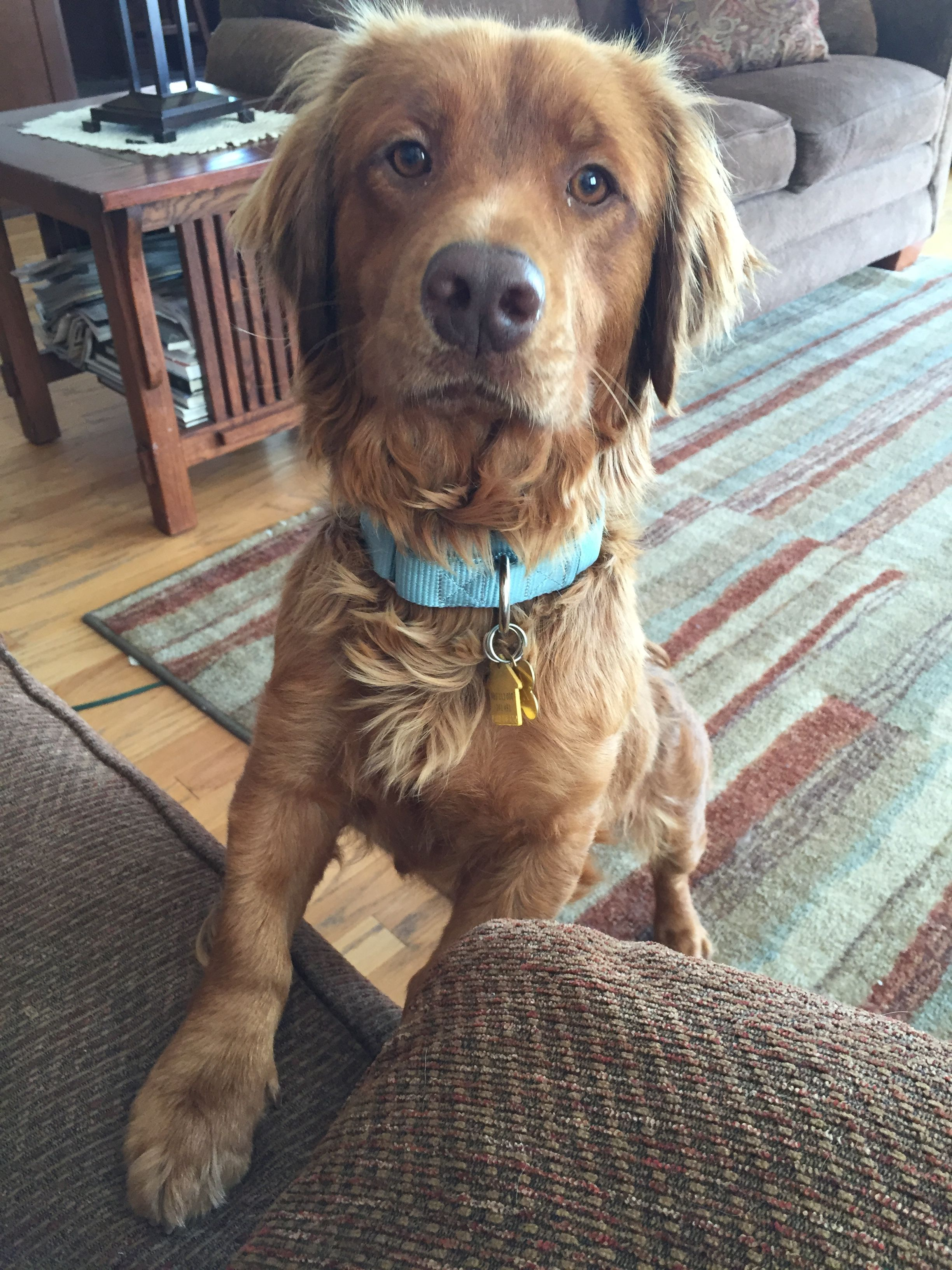 Slinky Adopted With Images Golden Retriever