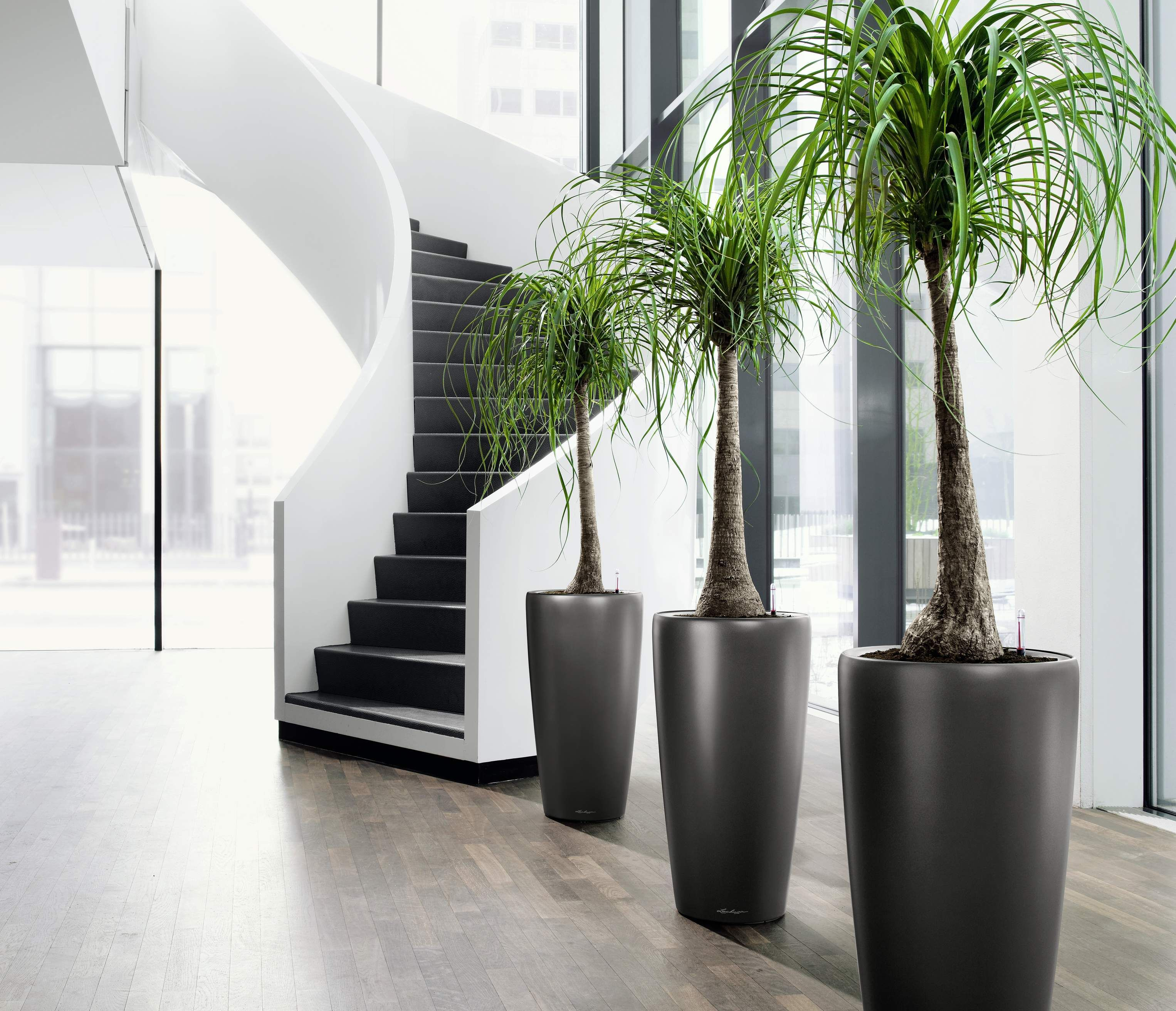 Indoor Plants For The Office Envirogreenery Interior Plants Office Plants For Massachusetts