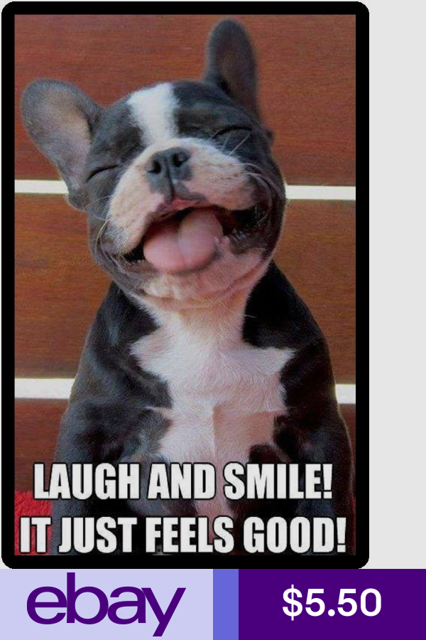 Funny Dog Humor French Bulldog Laugh And Smile Refrigerator Magnet Funny Good Morning Memes Funny Dogs Bulldog Quotes