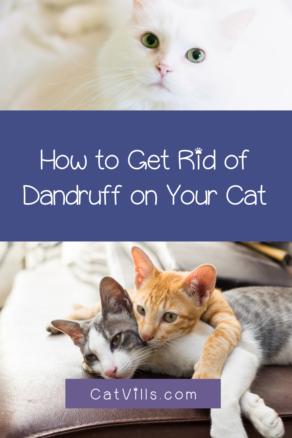 6 Easy Ways To Get Rid Of Dandruff On Your Cat Catvills In 2020 Pet Care Cats Cats Cute Cats And Kittens