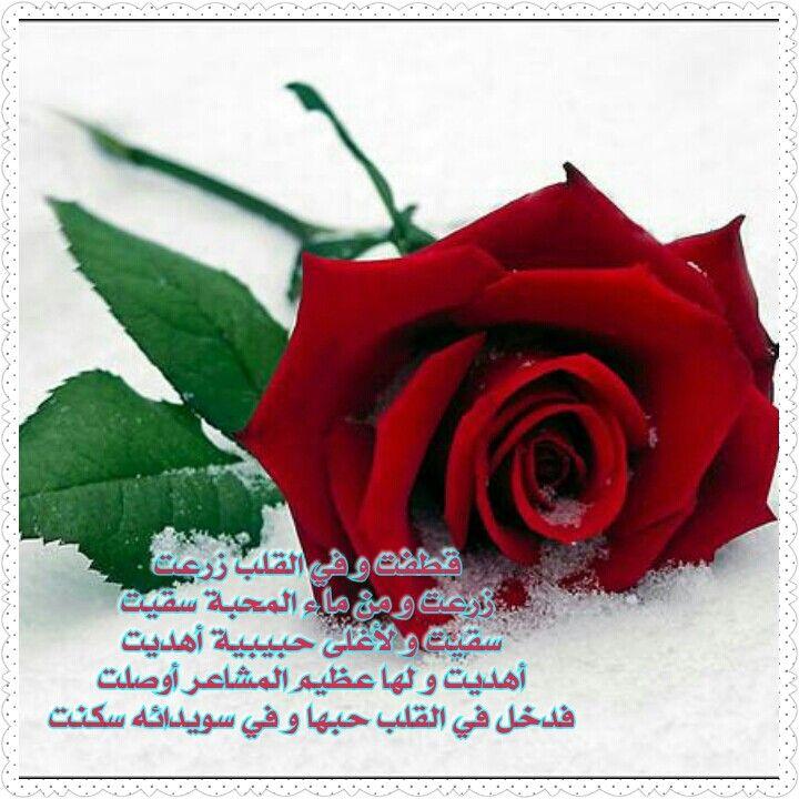 Pin By H هيثم J On زوجتي الغالية Rose Flowers Rose Flower